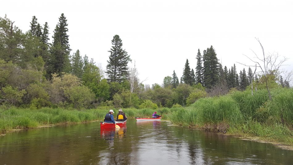 Kayaks on the Battle in the Boreal Forest